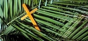 iStock-palms2_01